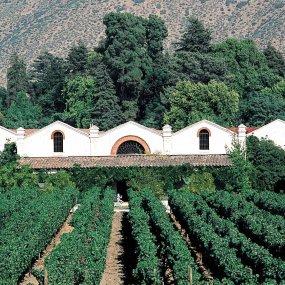 Weingut Caliterra hinter den Reben © Caliterra