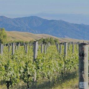 Weingarten im Norden der Südinsel  © Cloudy Bay Vineyards