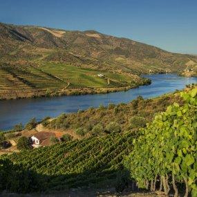 Weinberge im Douro-Tal © Dow´s Port
