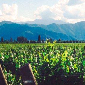 Weingärten in den Täler © De Martino