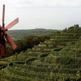 Steile Terrassenweingärten von Vino Gross