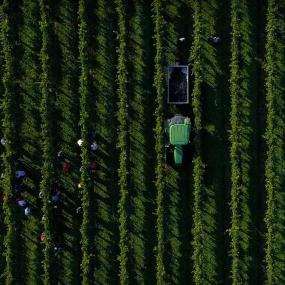 Über dem Weingarten © Di Lenardo