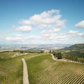 Weingärten von Corte Pavone © Alex Filz