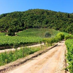 Im Weingarten © Casa Lapostolle