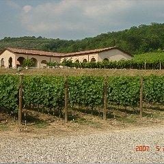 Der Weingarten © Az. Agr. Marion