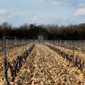 Im Weingarten © Jaques Combe