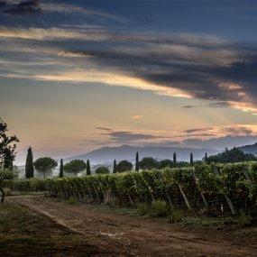 Sonnenuntergang am Weingut Monteverro © Leif Carlsson