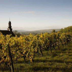 Weingarten Battenfeld-Spanier © Weingut Spanier-Gillot GbR