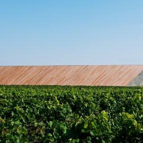 Mitten im Weingarten © Hertha Hurnaus