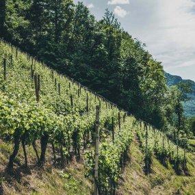 Montan-Blauburgerland © Tiberio Sorvillo