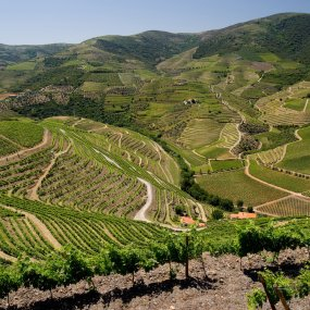 Weingärten von Quinta de Roriz © Prats & Symington