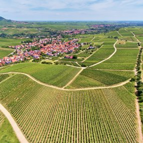 Mandelberg © Weingut Ökonomierat Rebholz