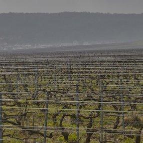 Weingärten im Herbst © Louis Roederer