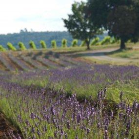 Die Provence © Maison Saint Aix