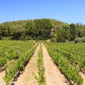 Weingarten in der Provence © HERVE FABRE PHOTOS