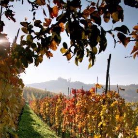 Weingarten im Herbst © Az. Agr. Scavino Paolo