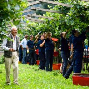 Im Garten bei der Weinernte © RONNYKIAULEHN.COM