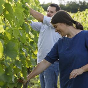 Im Weingarten © Weingut Lichtenberger González