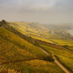 Bick auf die Weingärten im Herbst © Weingut Spanier-Gillot GbR
