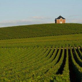 Weingärten von Moët & Chandon © Photographer Julien claessens & Philippe Galowich